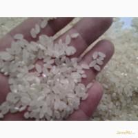 Российский рис