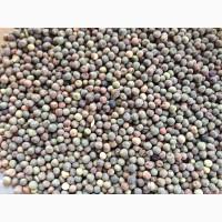 ООО НПП «Зарайские семена» закупает фуражное зерно:горох от 40 тонн