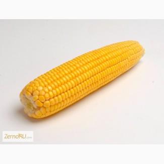 Кукурузу 3, 4 класса продажа