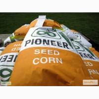 Семена гибридов кукурузы П7709, П8400, ПР37Н01, ПР39Д81, ПР39Ф58 от Pioneer