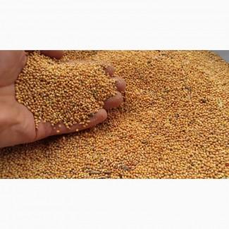 ООО НПП «Зарайские семена» закупает фуражное зерно:просо желтое от 10 тонн