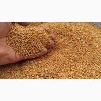 ООО НПП «Зарайские семена» закупает фуражное зерно: просо желтое от 10 тонн
