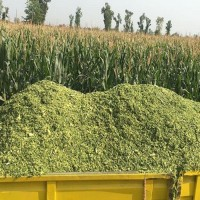 Сенаж многолетних и однолетних трав, силос кукурузный