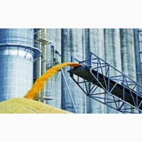 Экспорт пшеницы 3 кл в Сирию