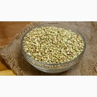 Зеленая гречка оптом - 10 тонн