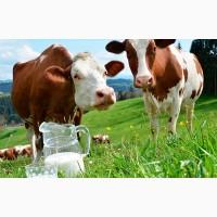 Аскобел для повышения белка в молоке (120г. на голову)