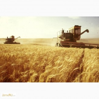 Привлекаем инвестиции, оптовая торговля зерном, экспорт. Урожай 2017