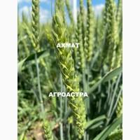 Семена озимой пшеницы краснодарской селекции ЭС