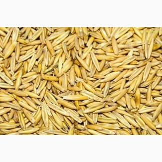 ООО НПП Зарайские семена закупает фуражное зерно:овес от 60 тонн