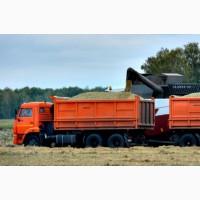 Свободные зерновозы по всей России. Услуги зерновозов
