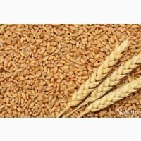 Пшеница 3 класса, 25000 тонн на экспорт