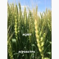 Семена озимой пшеницы донской селекции