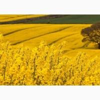 ООО НПП «Зарайские семена» на постоянной основе продает семена рапса ярового