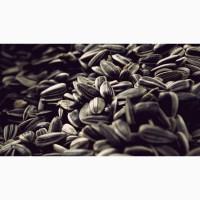 Куплю масличный подсолнечник
