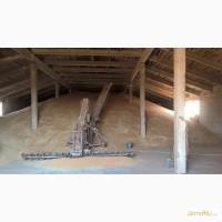Пшеница оптом от производителя