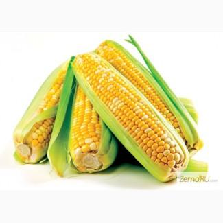 Гибриды семена Кукурузы (Pioneer, Limagrain, Singenta, Monsanto, NS, )