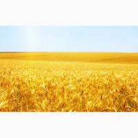 Покупка пшеница 3.4 самовывоз