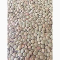 Продам чечевицу зеленую урожая 2018 года