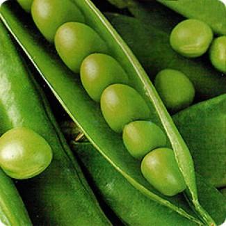 Семена гороха Аксайский усатый 7, Усатый кормовой