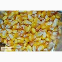 Закупка кукурузы до 3000т. в месяц
