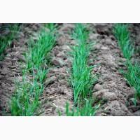 Покупка пшеница 3.4.5. Самовывоз