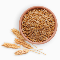 Продаем яровую пшеницу