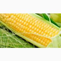 Гибриды семена кукурузы П7709, П8400, ПР37Н01 (Пионер, Pioneer)